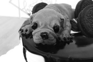 中国の犬型ケーキはリアルすぎて食欲失せる・・・