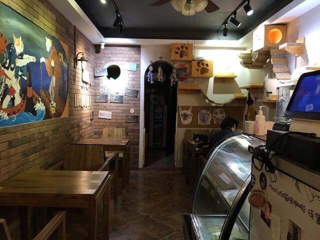 中国西安の猫カフェの様子