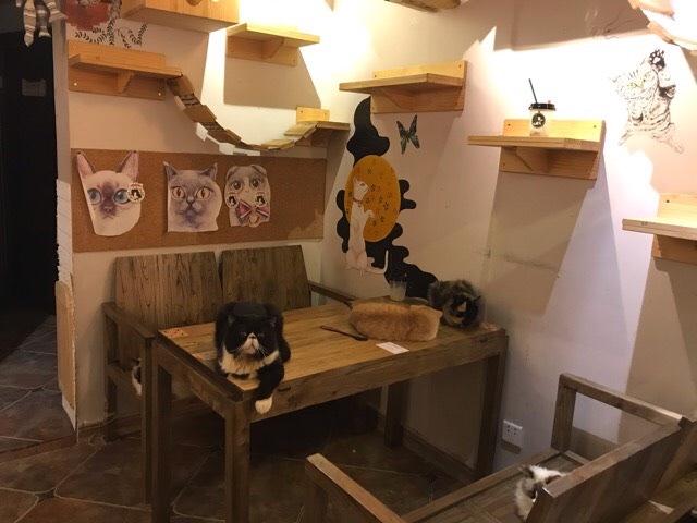 中国の猫カフェは人慣れした猫が多い