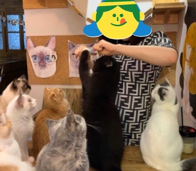 猫カフェで猫たちにおやつを与えてみた