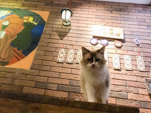 中国の喧騒に疲れた方はぜひ猫カフェへ行ってみて